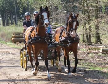 Hästar på Söderåsen