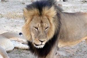 Lejonet Cecil när han levde